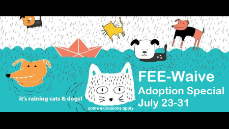 It S Raining Cats Dogs Huntsville Animal Services Waives Fees During Adoption Event Whnt Com