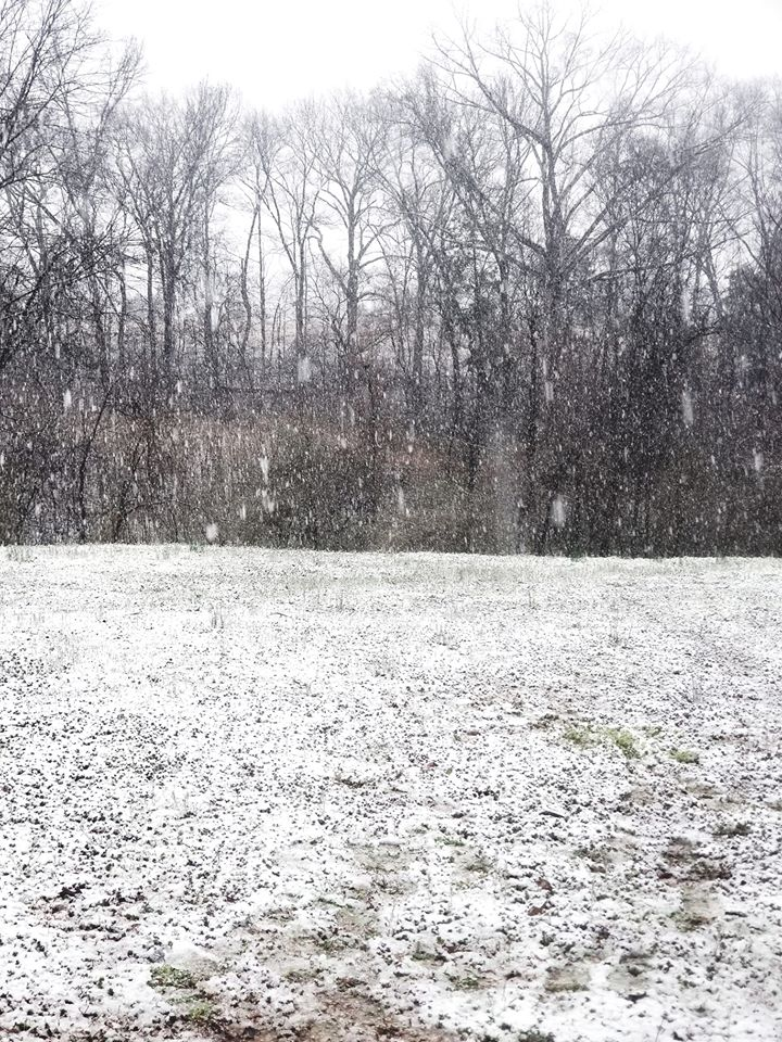 Haley Gilley sent this picture from Center Star