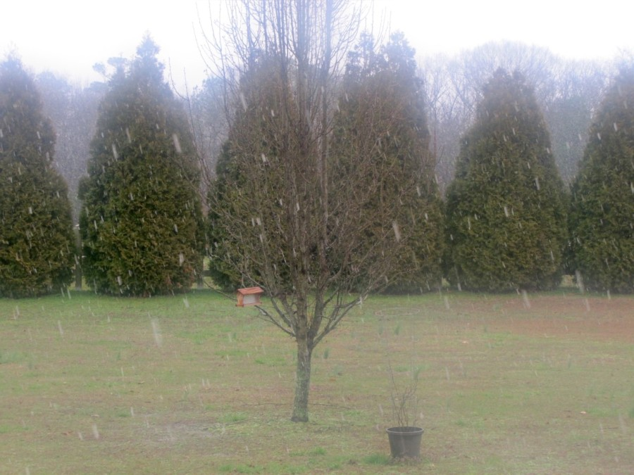 Lindsey Mitchell sent this picture from East Limestone