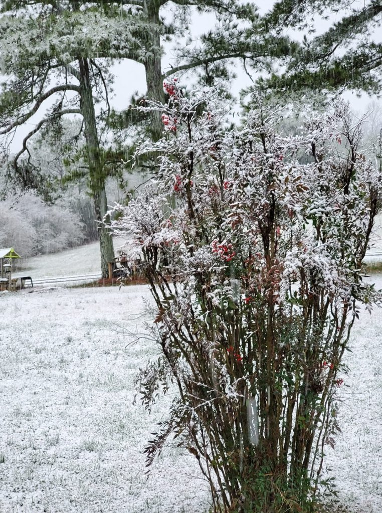 Angie Brogdon sent this picture in from the Macedonia community.