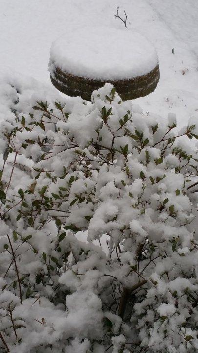 Lisa Phillip Sullivan and the Hytop community saw snow Saturday morning.