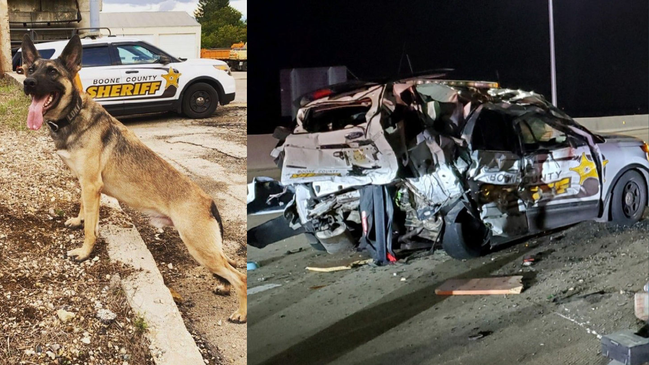 Drunk driver crashes into Illinois patrol car, killing K-9, authorities say