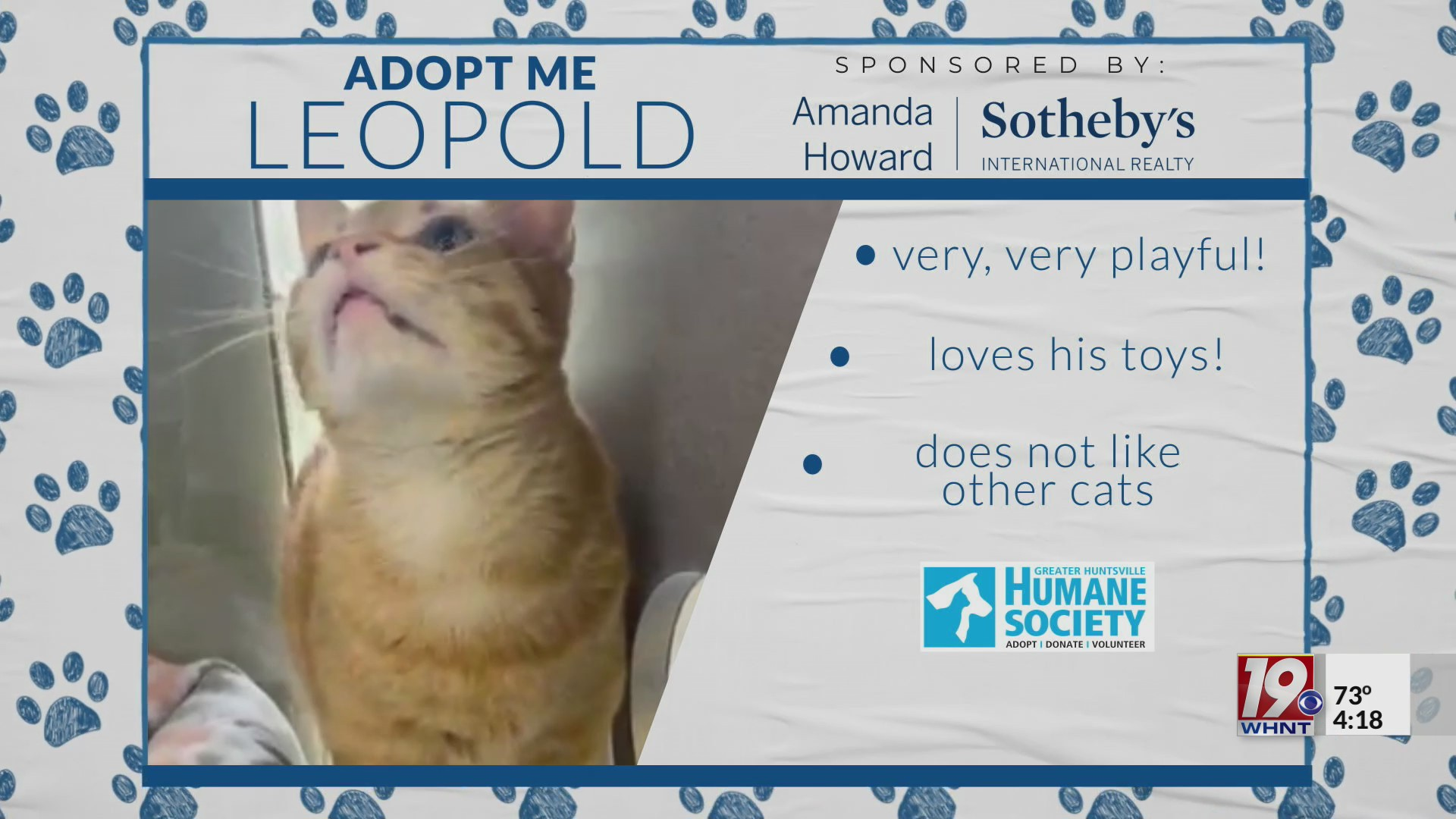 Leopold the cat available for adoption