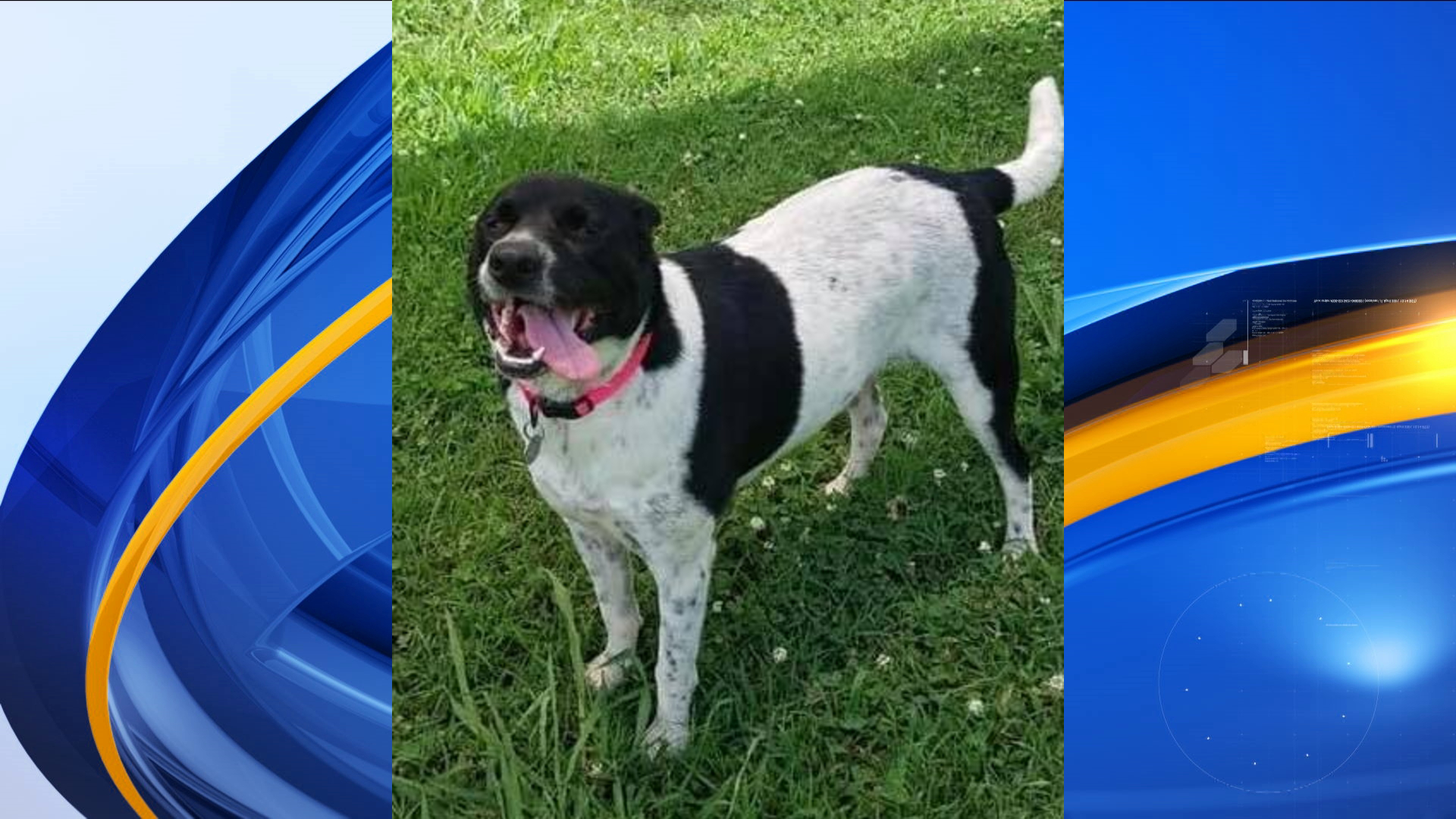 Enola is one of several animals looking for forever homes at Huntsville Animal Services.