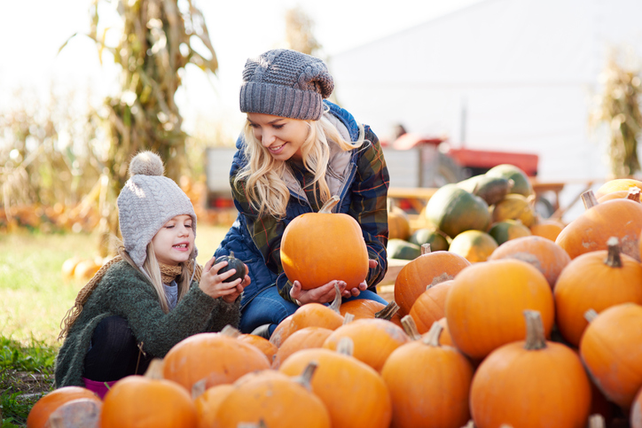Pumpkin patches in north Alabama and the Tennessee Valley